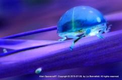 inverted color - ladybug on blade of grass