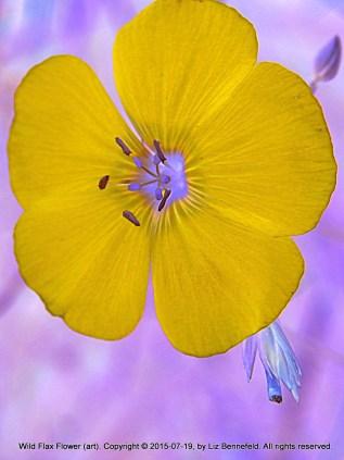 Blue WIld Flax Flower (Art)