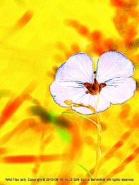 Variation on a Flower (2)