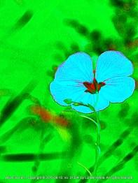 Variation on a Flower (3)