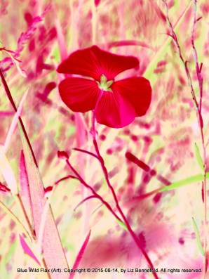 Wild Flax in Red