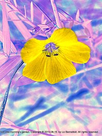 digitally modified photo of blue wild flax flowers