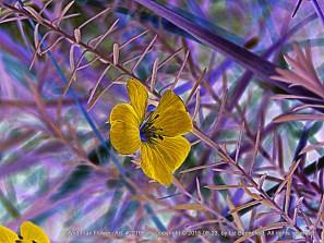 Wild Flax in Yellow