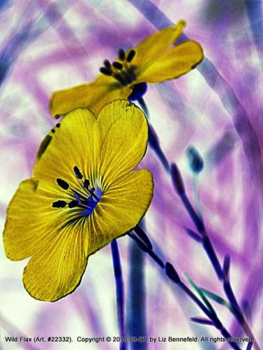 Two Wild Flax (Art)