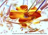 Blue Wild Flax, no. 23170