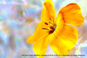 Flax Flower #24453