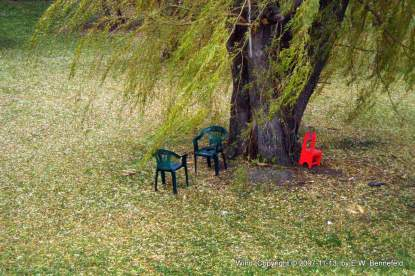 empty chairs under a willow