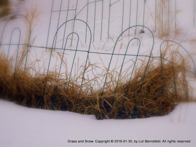 tall dead grass in the weeds along the garden plot