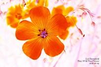 Flower Art #7646