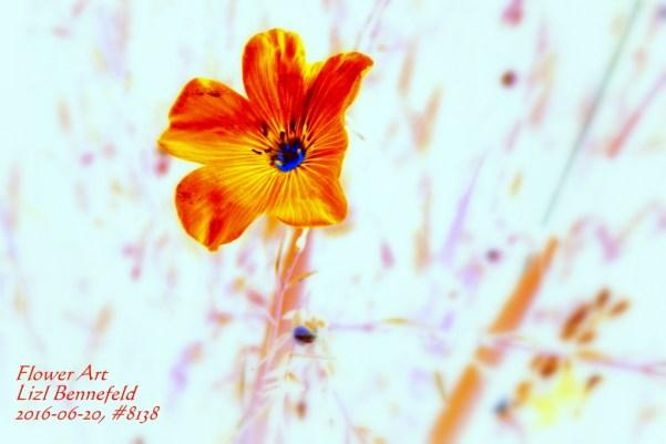 Blue Wild Flax #8138 (Art)