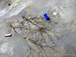 discarded dog toys in rain puddles reflecting tree branches