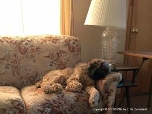 Charlie's Morning Nap