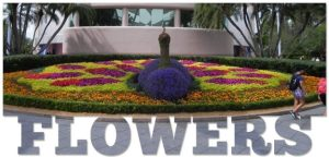 Wordless Wednesday: Epcot International Flower & Garden Festival