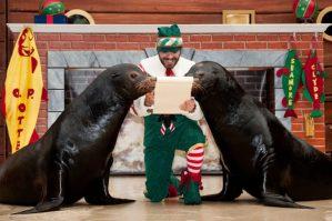 SeaWorld's Christmas Celebration…Where the Season Meets the Sea