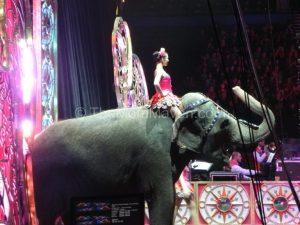 Ringling Bros Circus Legends Show Re-Cap