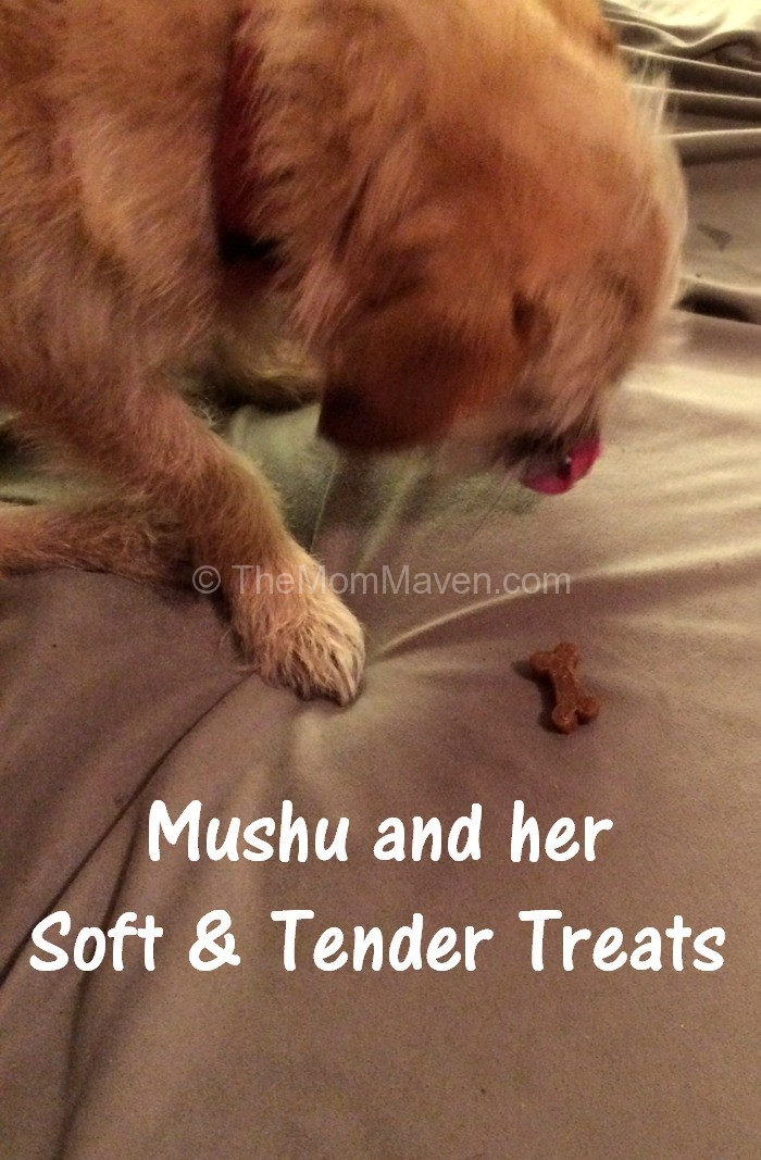 Soft Dog Treats Recipe Pumpkin Tapioca Starch
