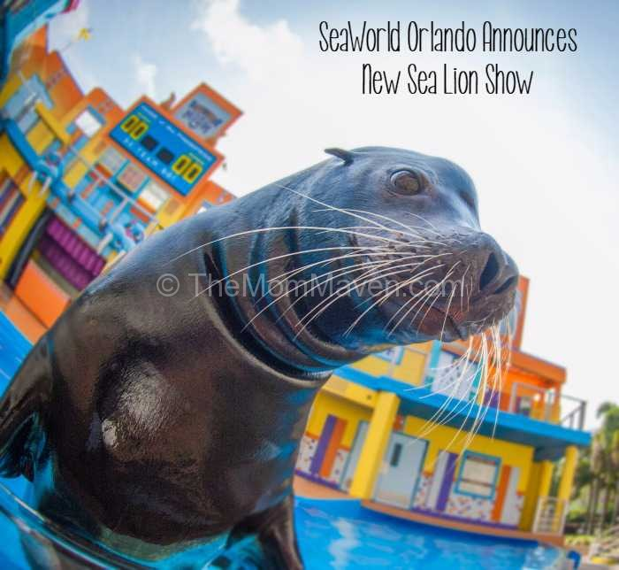 Clyde and Seamore's Sea Lion High