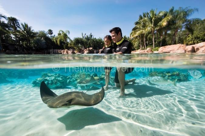 Best All Inclusive Resorts Swim Up Rooms