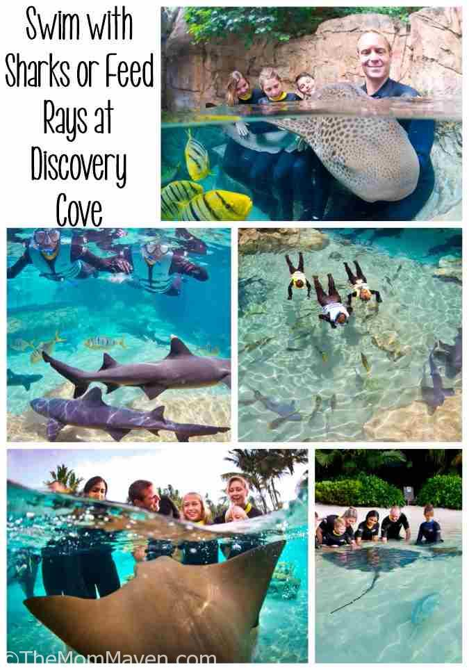 Guests who take part in the new Discovery Cove Shark Swim program will walk away with a deeper understanding and appreciation for these fascinating ocean ambassadors.