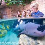 Discovery Cove Announces New Shark Swim Program