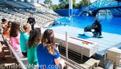 Take the Killer Whale Up-Close Tour at SeaWorld