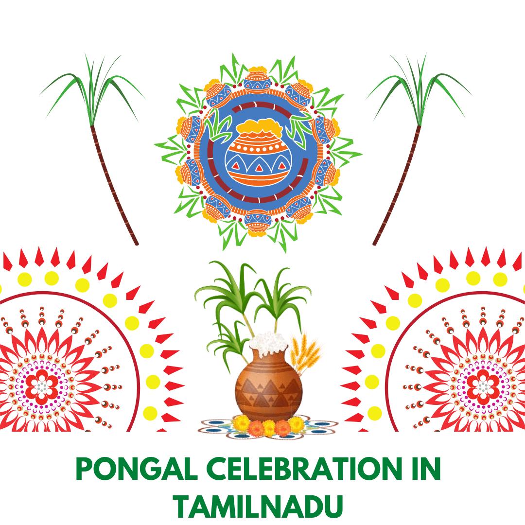 Pongal celebration in Tamilnadu