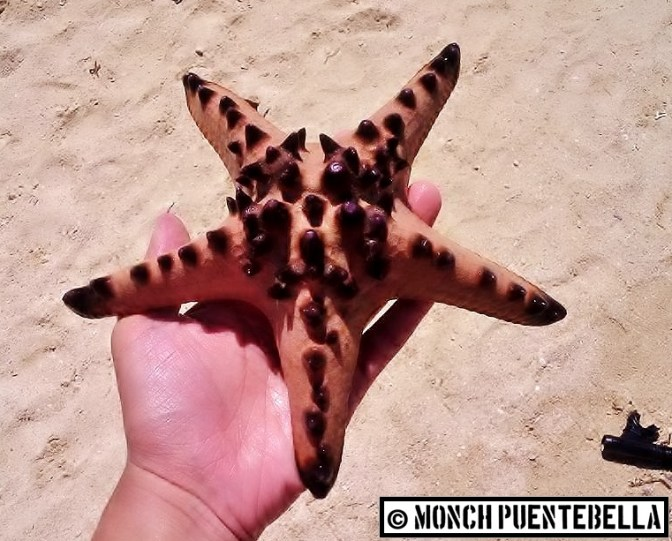 Met one of Patrick Star's cousins over at Starfish Island, Palawan.