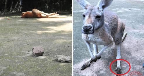 inconsiderate-zoo-visitors-kills-kangaroo-by-throwing-bricks-just-to-see-her-jump-world-of-buzz-4