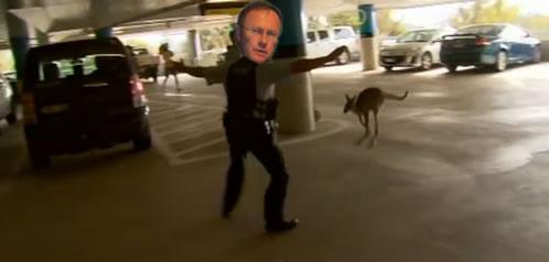 kangaroo_cappell