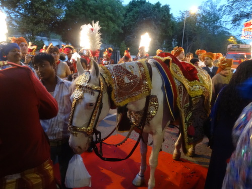 Delhi horse
