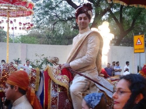 delhi goorm horse