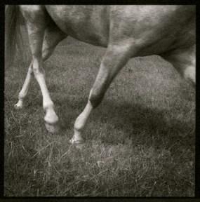 Lorenzo Dow's Horse