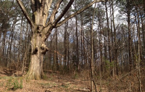 Winter Forest from Tsali Ghost Story Cherokee North Carolina