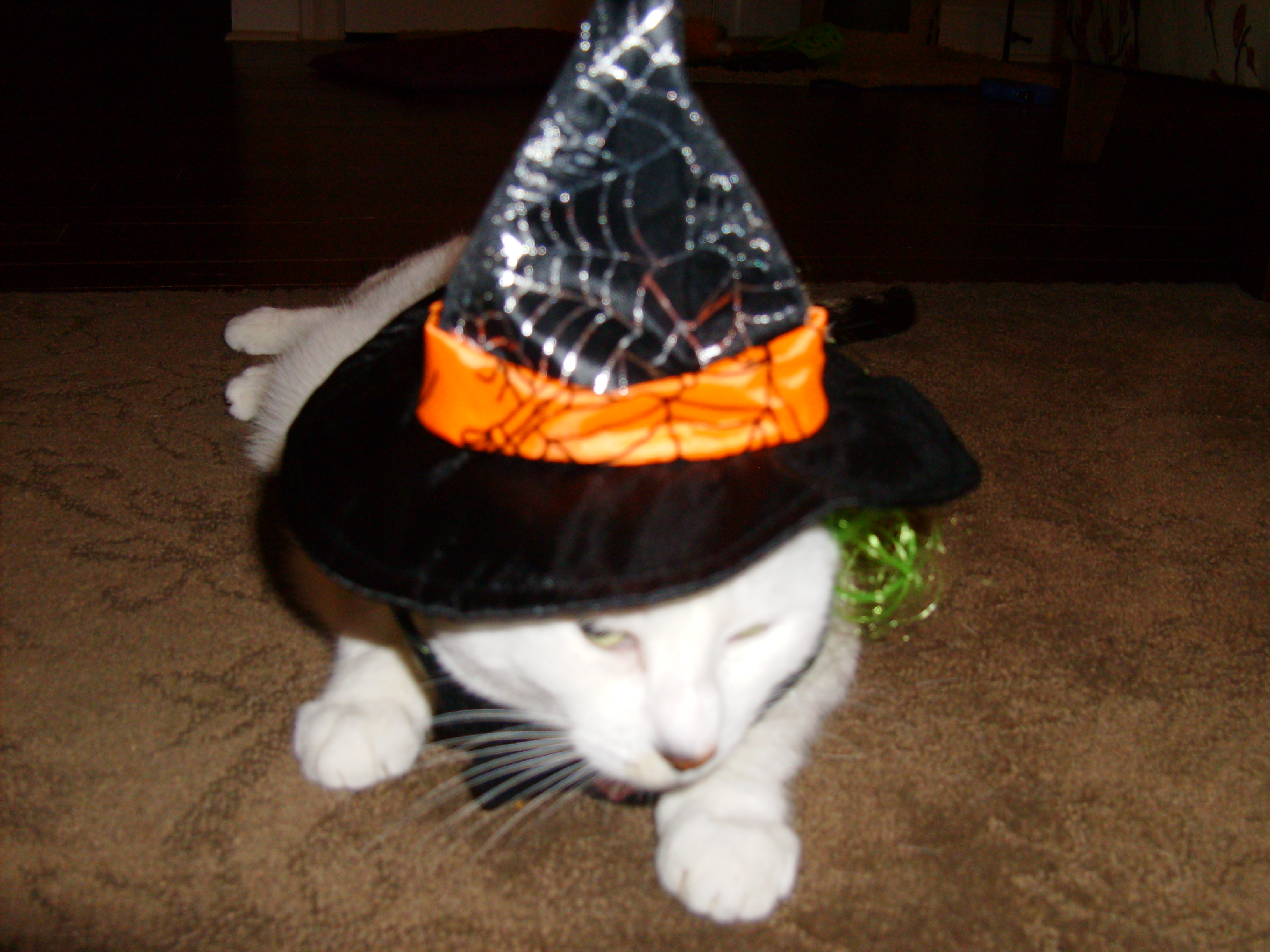 Whitey as Witch