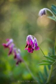 Anonymous wildflower (ID pending)