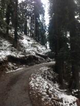 The sound of fresh snow slipping down the pine needles kept us company.