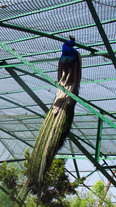 Himalayan Bird Park 04