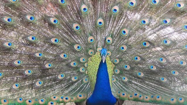 Himalayan Bird Park 14