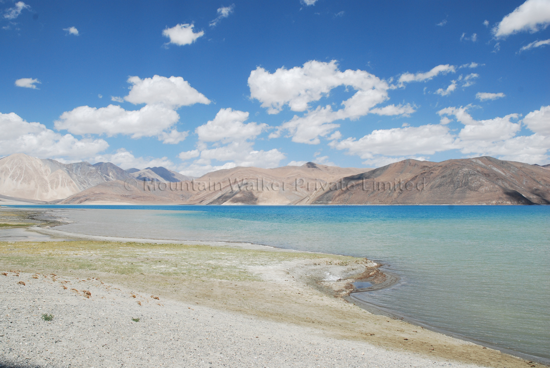 Patches of green in the otherwise barren land at Pangong Tso; Photo: Abhishek Kaushal
