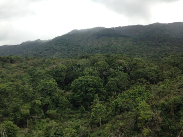 Shola National Park 01