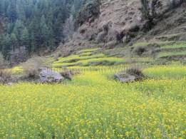 Refreshing benefit of visiting Barot in spring; Photo: Abhishek Kaushal