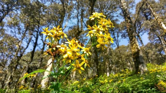 Himalayan Flora Series 4 - 02