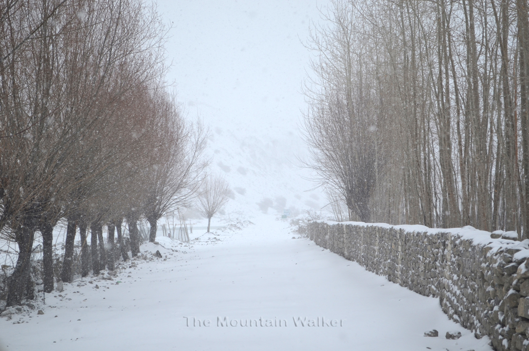 The road as seen on 25th January, 2017.