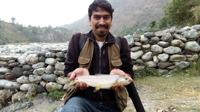 Brown-Trout_Tirthan