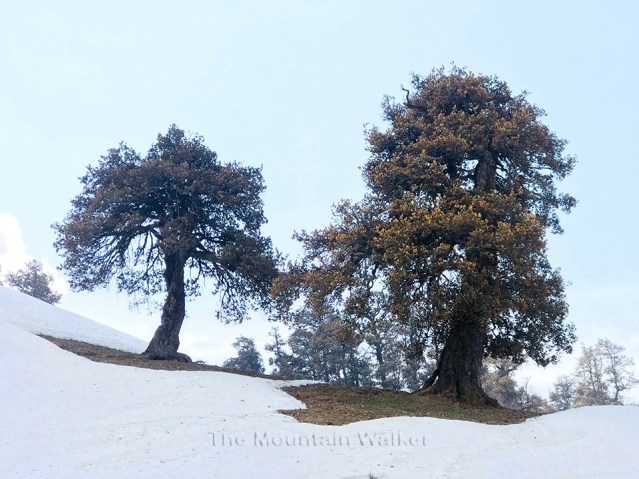 WM Chandrakhani Forests 11