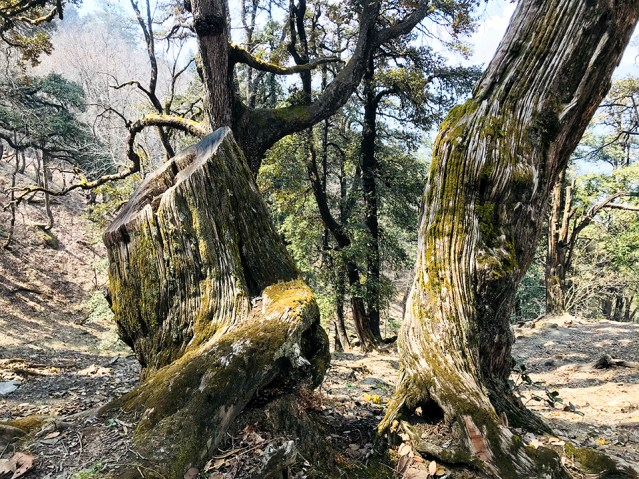 WM Chandrakhani Forests 13