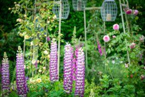 Lake District B&B garden