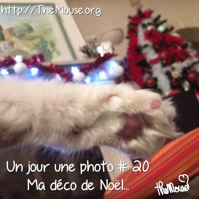 2014/12/img_3496.jpg