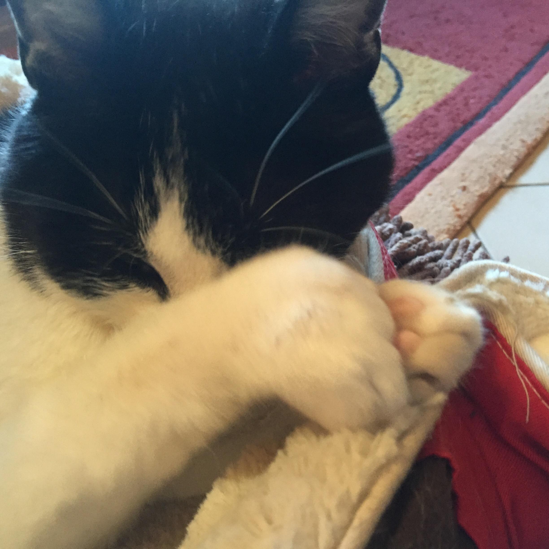 Vie de chat: Flip ne veut pas voir le lundi!!!