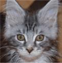 SoPsY: 8 rôles principaux des animaux de compagnie